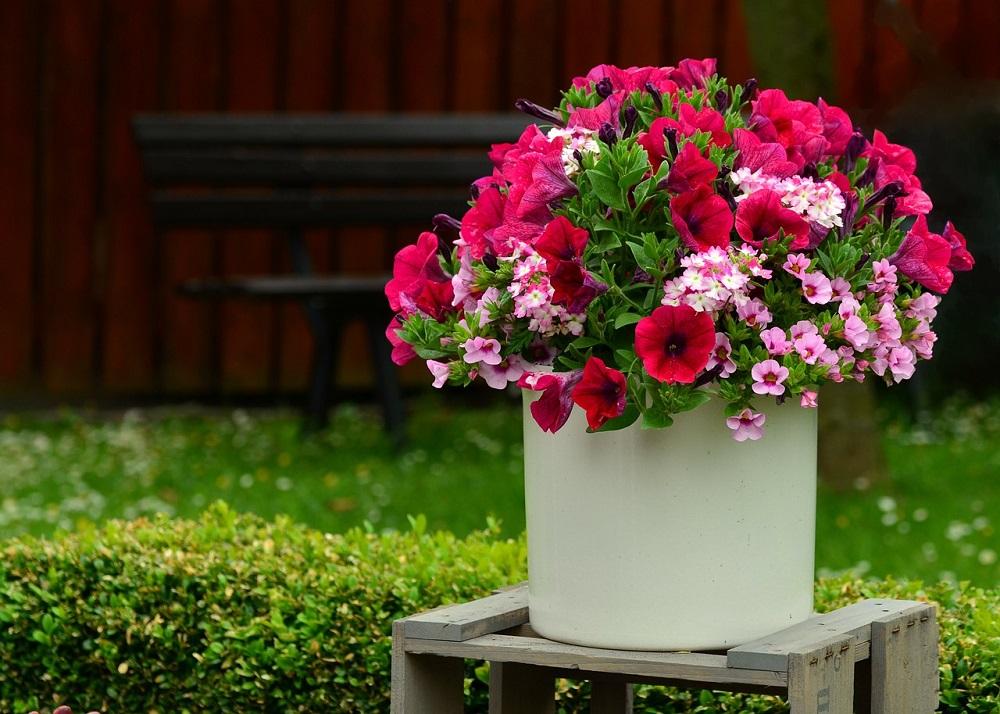 Plantas para decorar espacios exteriores