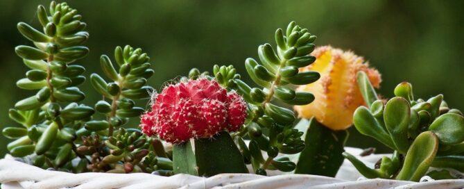 Cómo decorar tu terraza o cerramiento con plantas